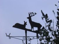 Exmoor deer