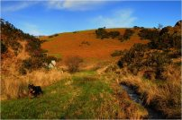 310 Twitchen Helen Ash Christmas Day on Exmoor