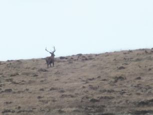 Daniel Deer 1 NOV