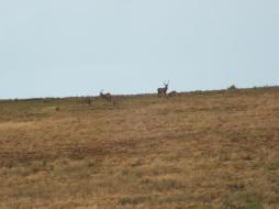 Daniel Deer 5 NOV