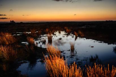301 Clayton Jane Early Sunrise