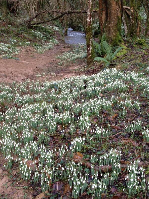 Janette Noyes, Snowdrop Valley