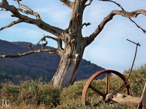 Porlock Marsh. Photo by John Crabb