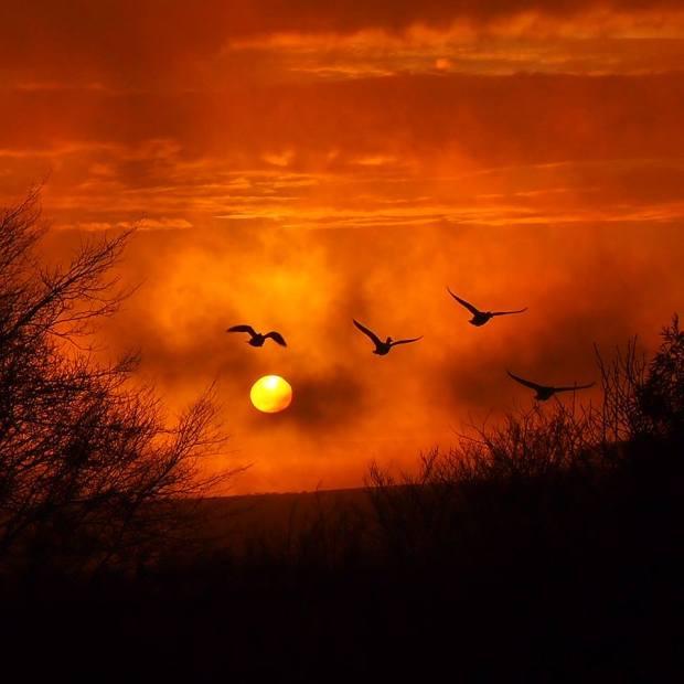 Tonight's sunset over Exmoor Zoo. Photo by Lynn Reynolds