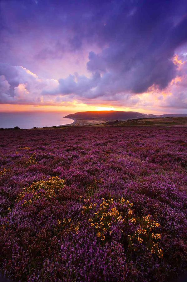 xxx Rob Hatton Exmoor Sunset
