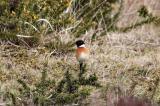 amanda braddick 2 march