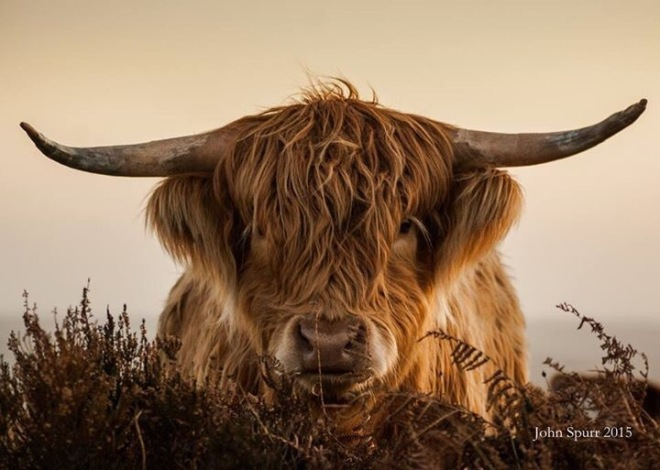 John Spurr was the overall winner of the Exmoor4all Photo Competition in March.