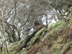 lee bradbury 1 march