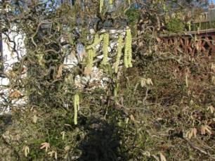 rosemary davis 3 march