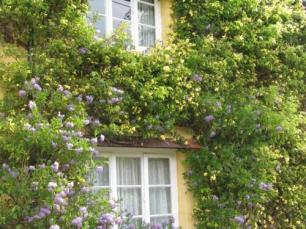 rosemary davis 1 may