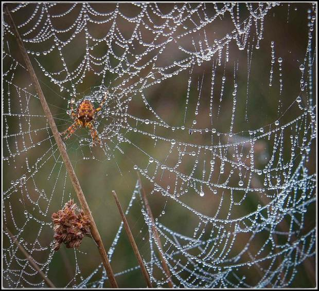 Suzie Gibbons took this photo of a spider's web at Landacre on Exmoor.