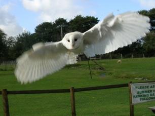 caspar-flight