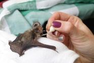Feeding baby bats