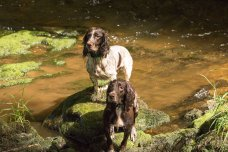104 Rob Davey Sprocker