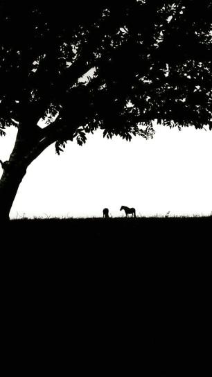 110 Pauly Allen - Exmoor Ponies on North Hill