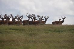 0208-daniel-deer-2