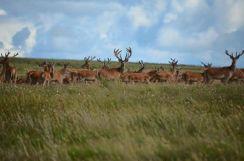 0308-daniel-deer