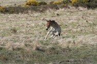 0308-the-photographer-%e2%80%8fwildlife_62-aug-3-new-life-on-exmoor