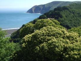 0408-annette-baker-from-lynton-looking-down-on-lynmouth