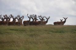 0508-daniel-deer-1