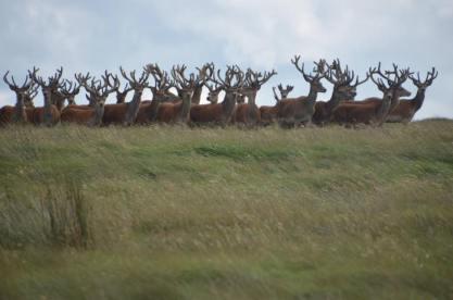 0508-daniel-deer-2