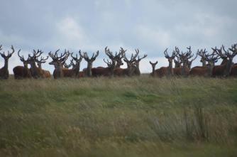 0508-daniel-deer-3