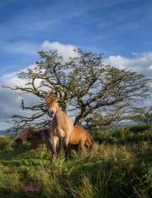 0508-helen-disberry-what-a-gorgeous-afternoon-on-molland-moor-weloveexmoor
