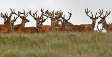 0708-julie-wicks-another-recent-exmoor-stag-party