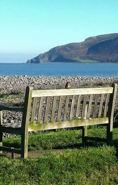 0908-pauly-allen-joined-by-a-robin-at-porlock-weir