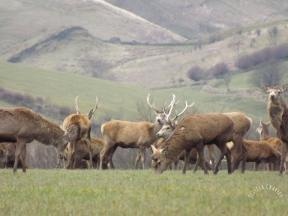1008-maurice-charley-daughters-photography-stags-at-simonsbath
