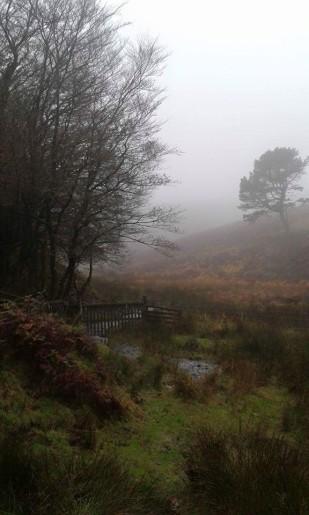 1008-paul-allen-autumn-morning-towards-exford