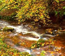 1008-robert-hatton-autumn-shower-at-horners-wood-exmoor