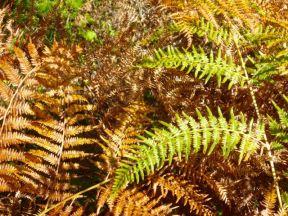 105-hazel-prior-green-gold