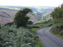 1108-annette-baker-the-beautiful-road-leading-to-robbers-bridge