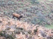 1108-daniel-deer-2