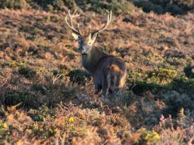 1108-daniel-deer-3