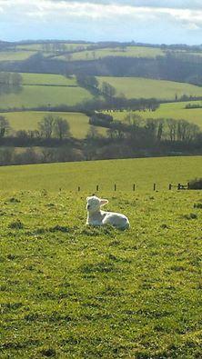 1108-pauly-allen-happy-little-chap-at-wheddon-cross-last-april