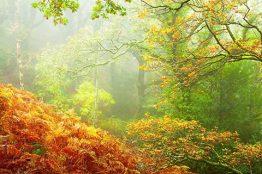 1108-robert-hatton-exmoor-rainforest-taken-on-a-misting-morning-in-horners-wood
