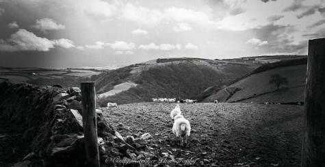 1208-cindy-kitchker-spring-time-walk-at-countisbury-hill