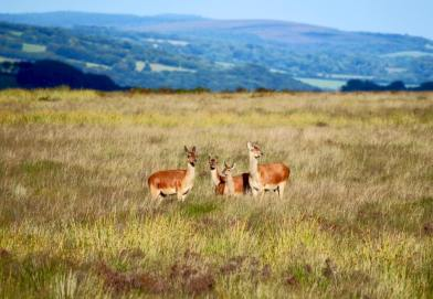 1208-linda-thompson-hinds-and-one-baby-enjoying-the-exmoor-sunshine