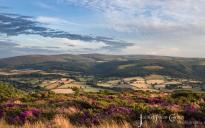 1308-julia-amies-green-a-carpet-of-exmoor-heather-looking-across-the-vale-of-porlock-in-the-last-of-the-evening-sunlight