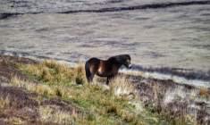 1308-linda-thompson-standing-alone