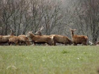 1408-maurice-charley-simonsbath-stags