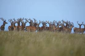 1508-daniel-deer-1