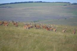 1508-daniel-deer-2