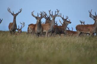 1508-daniel-deer-3