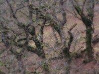 1508-exmoor-life-1
