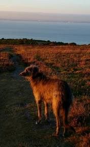 1708-maggie-smith-shadow-catching-the-glow-of-the-setting-sun-last-night-on-our-evening-stroll-on-north-hill-minehead
