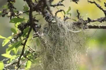 1708-sharon-scott-lichen-at-woolhanger