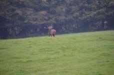 2108-daniel-deer-1